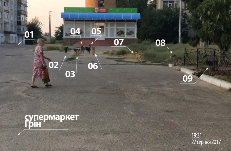 Мешканці райцентру Херсонщини потерпають від нападів бродячих собак, фото-1