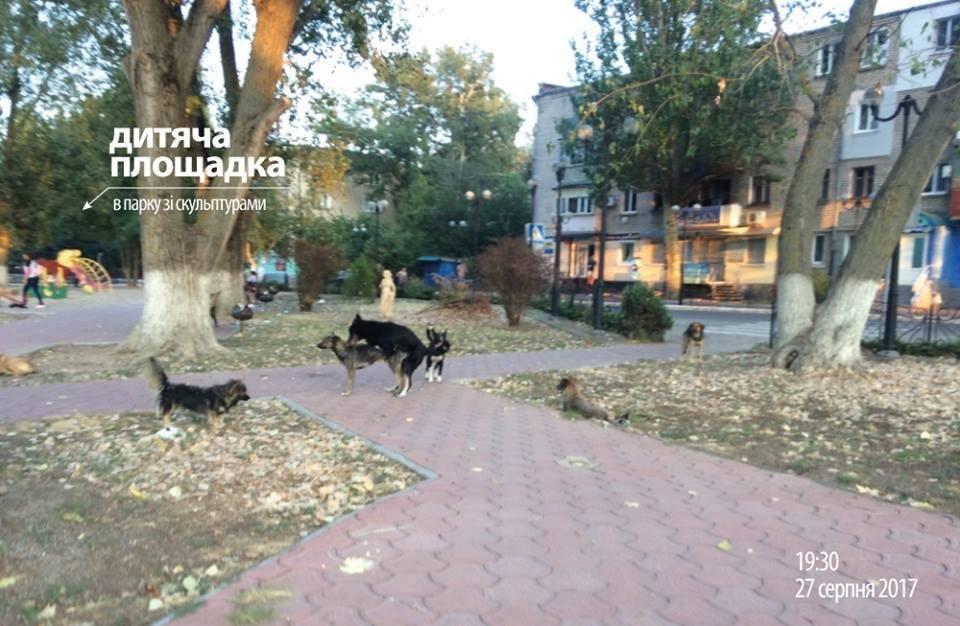 Мешканці райцентру Херсонщини потерпають від нападів бродячих собак, фото-2