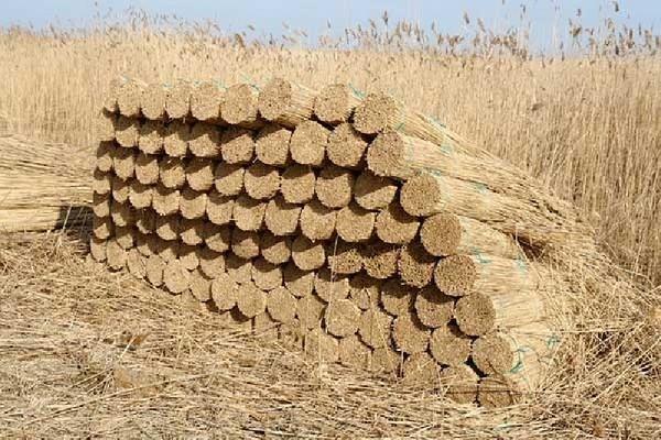 Херсонські аудитори обчислили збитки від заготівлі очерету в Голопристанському районі, фото-1