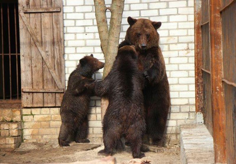 Херсонских медведей снова запрут в клетку?, фото-1