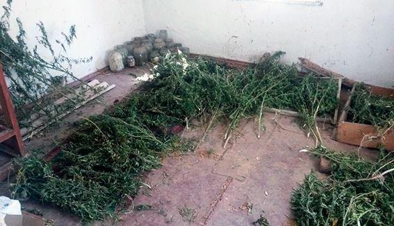 Дільничні офіцери поліції вилучили 5 кг коноплі у жительки Верхньорогачицького району, фото-2