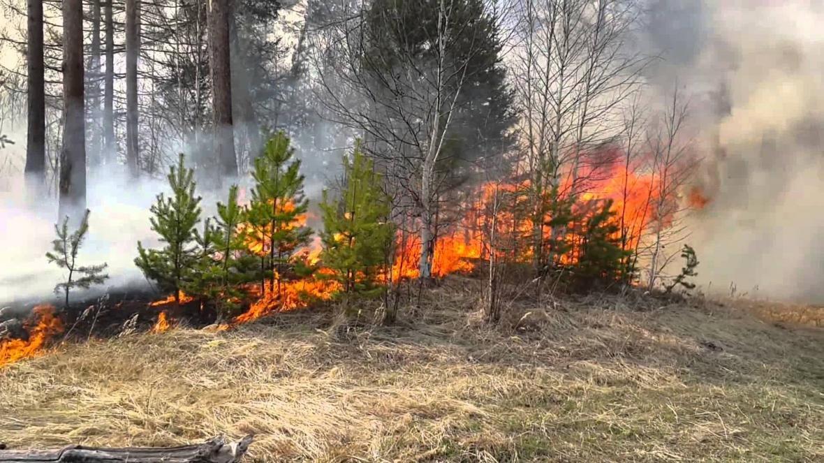 За останні 2 доби в області ліквідовано 5 лісових пожеж, фото-1