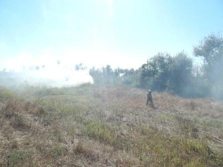За минулу добу ліквідовано 12 пожеж в екосистемах, фото-1