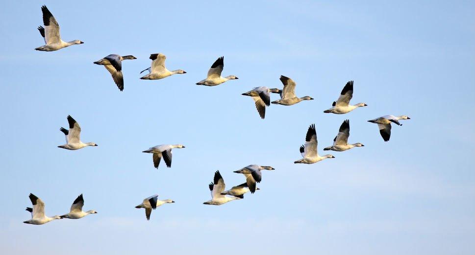 На Херсонщине продолжают выяснять причину массового мора перелетных птиц, фото-1