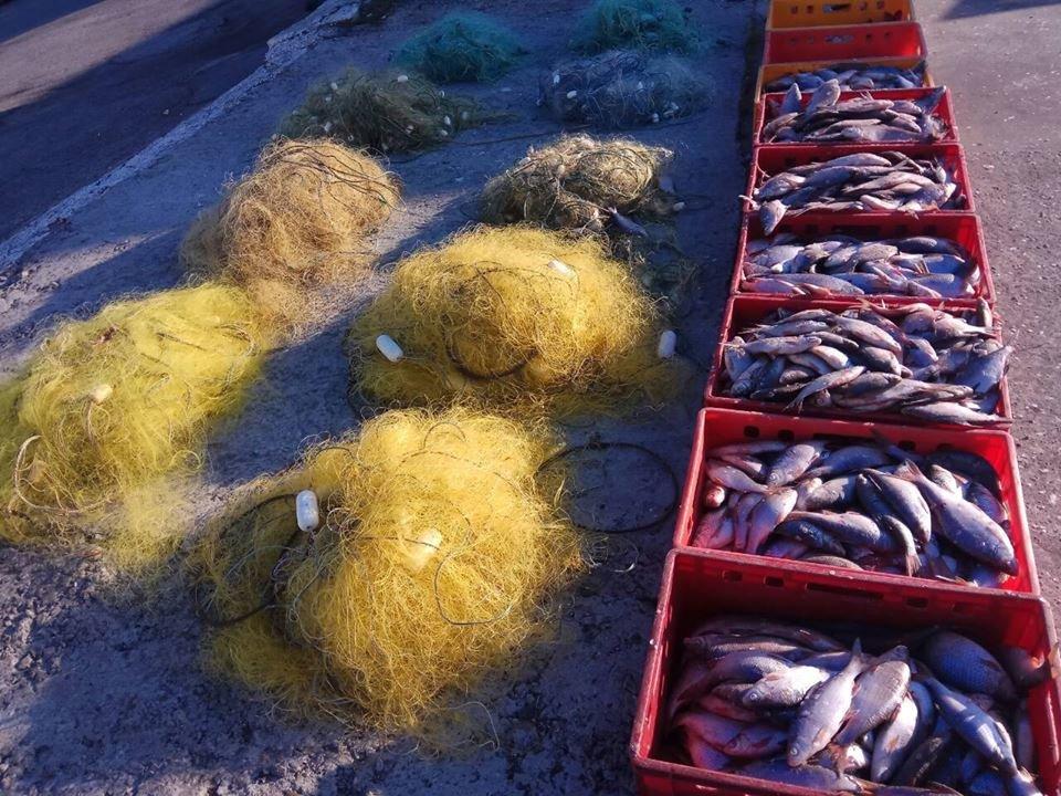 На Херсонщині поліція відкрила кримінальне провадження за фактом незаконного вилову риби, фото-1