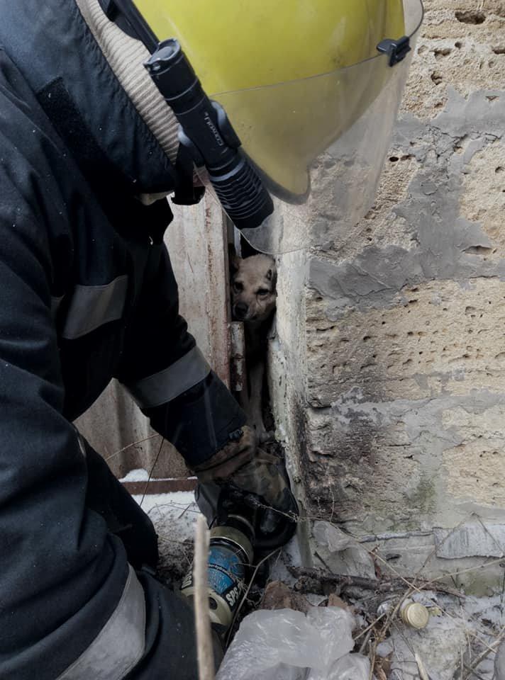 Спасатели Херсонщины помогли собаке, застрявшей между гаражами, фото-1