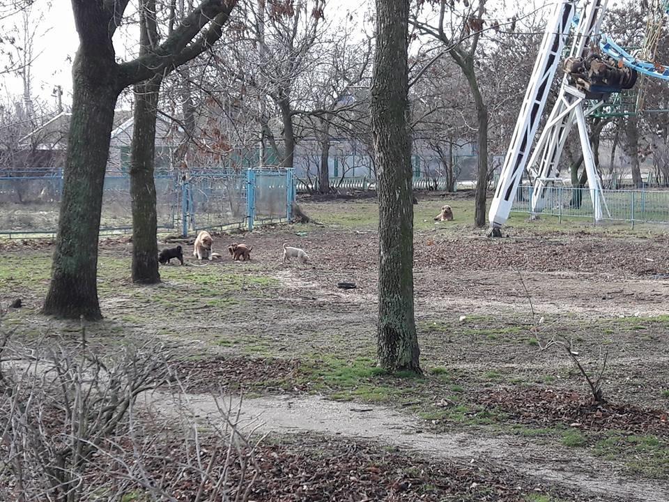 Жители курортного города Херсонщины обеспокоены количеством бездомных собак, фото-1