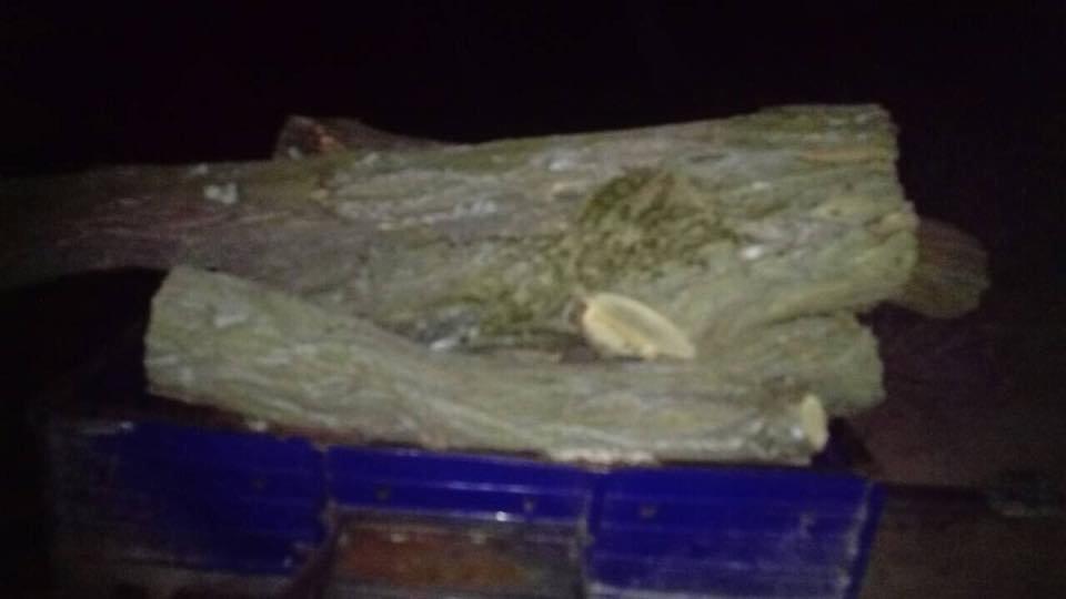 В Херсонской области задержали браконьеров, фото-2