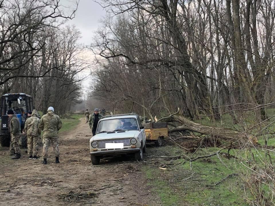На Херсонщине задержали браконьеров-лесников, фото-1