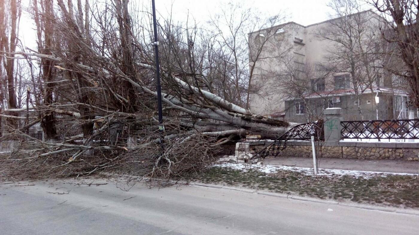 """""""Деревопад"""" в Херсоне (фото), фото-2"""