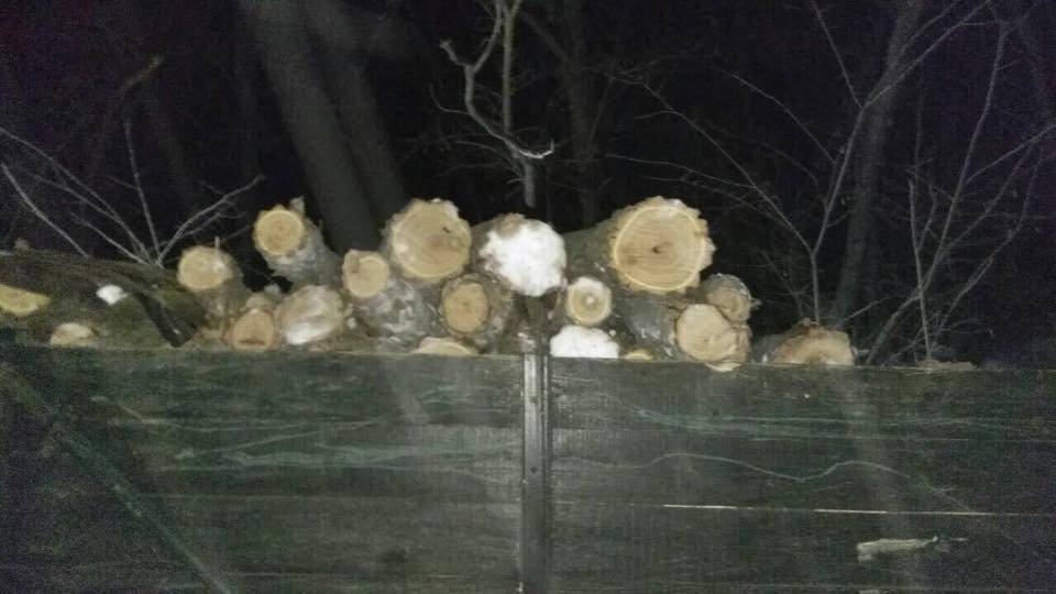 На Херсонщине продолжаются незаконные вырубки леса, фото-1