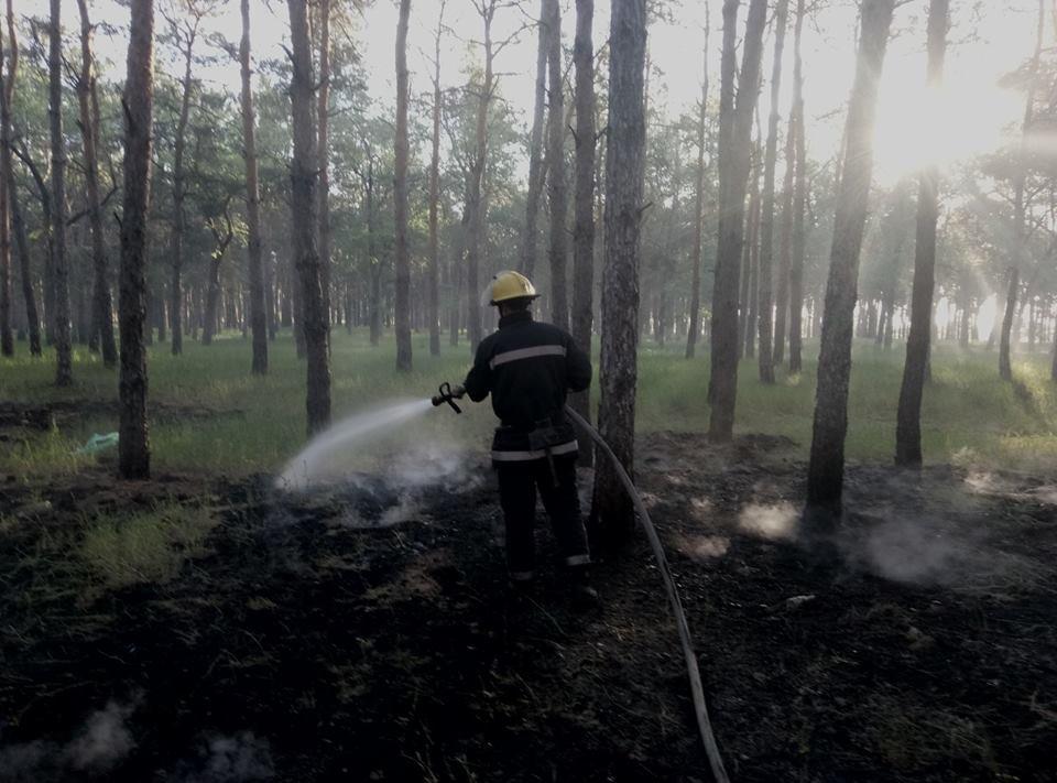 На Херсонщине лесной пожар спровоцировали отдыхающие , фото-1