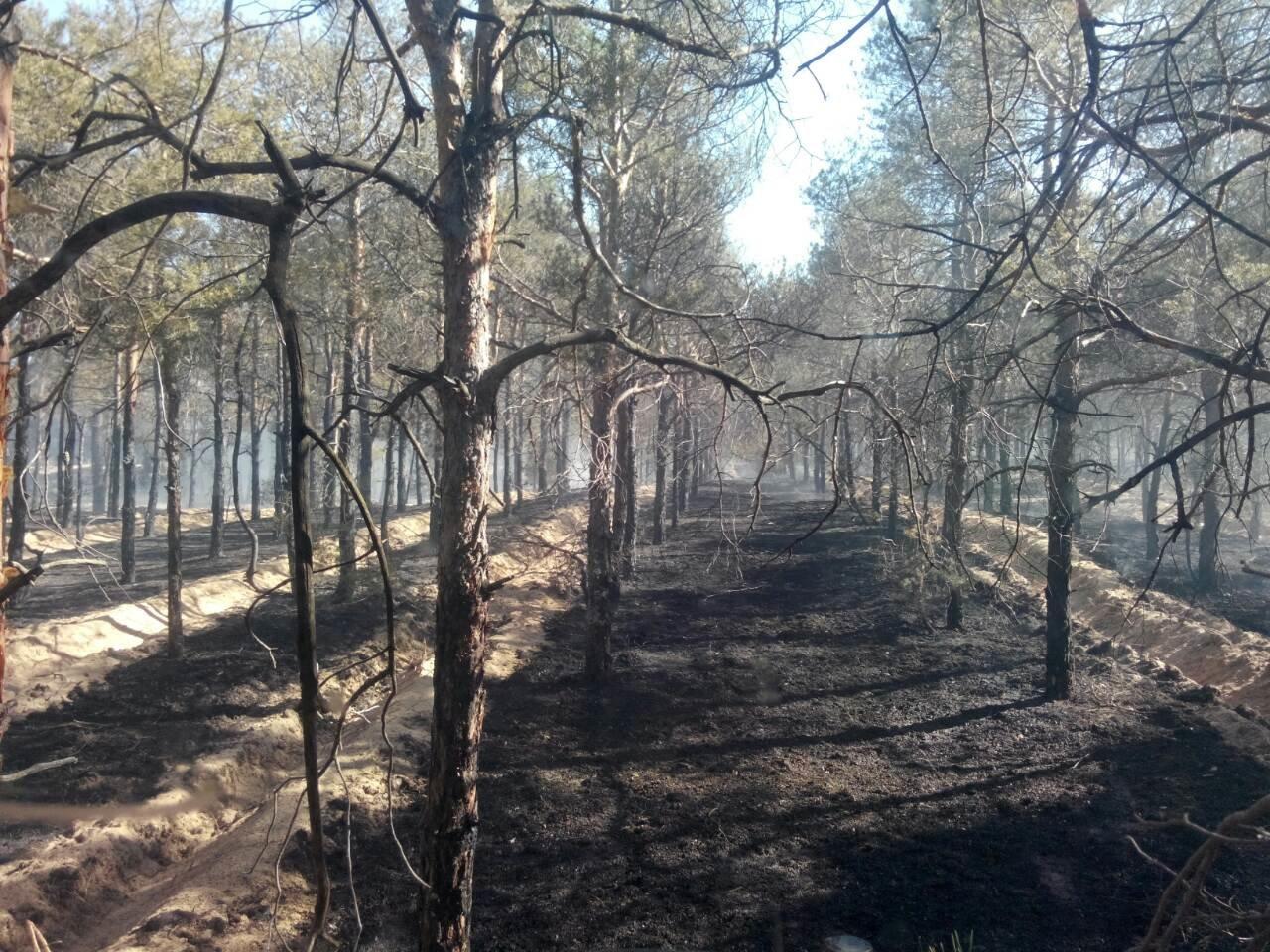 У перший день травня у трьох районах горів ліс, фото-1