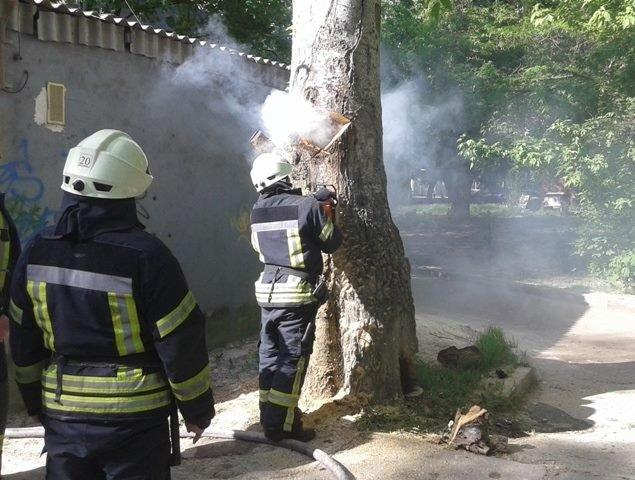 Херсонські рятувальники загасили дерево, що почало горіти із середини, фото-1
