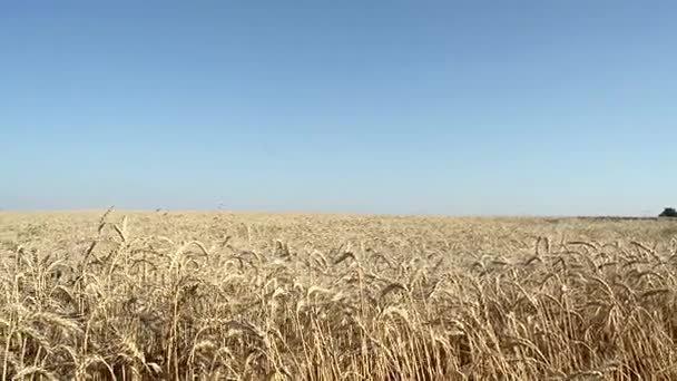 В Херсонской области сгорело 170 га пшеницы , фото-1