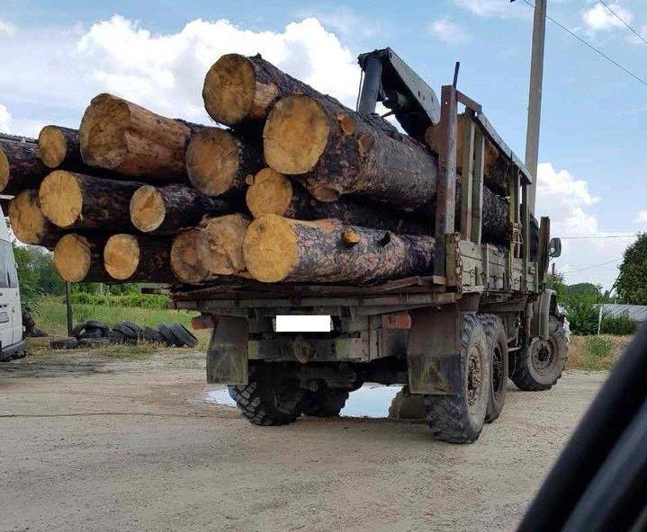 В Херсонской области «пропадает» лес, фото-1