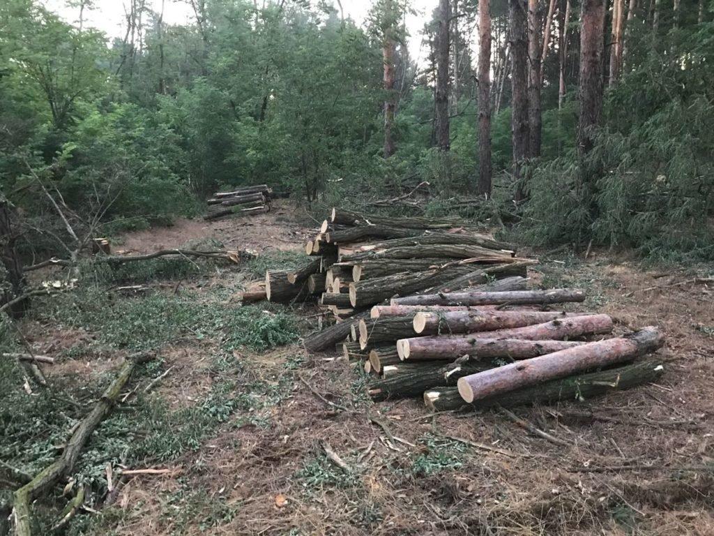 Троих жителей Херсонщины задержали за вырубку леса, фото-2