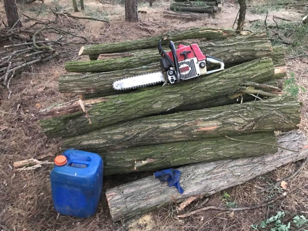 Троих жителей Херсонщины задержали за вырубку леса, фото-1