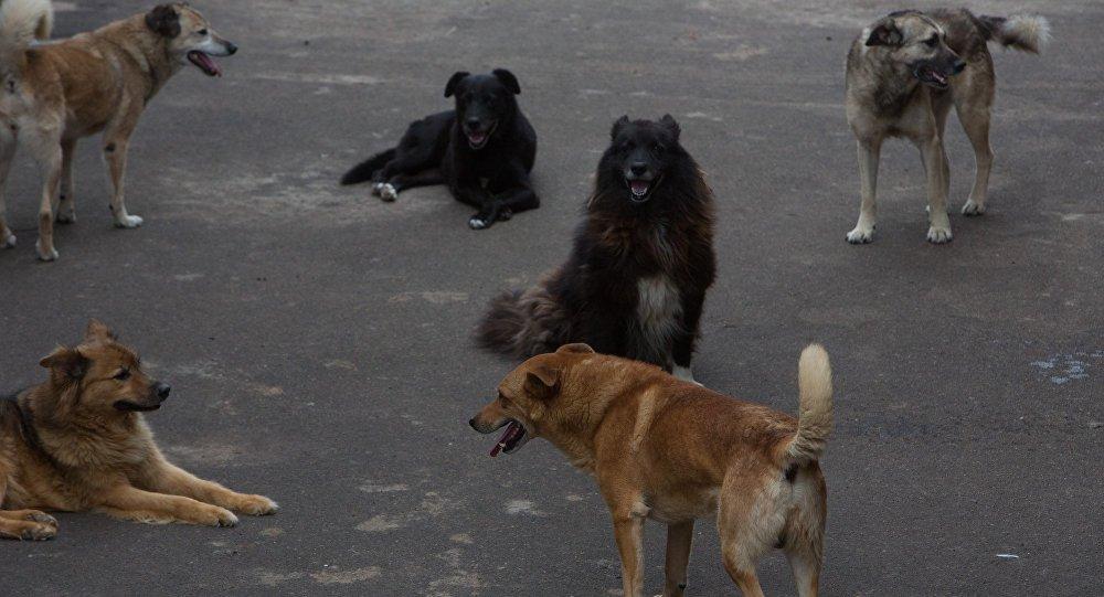 На улицах Херсона разлагаются бродячие животные, фото-1