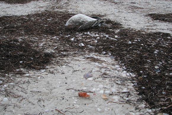 Побережье острова на Херсонщине усыпано мертвыми птицами, фото-1