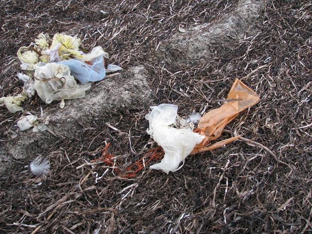 Побережье острова на Херсонщине усыпано мертвыми птицами, фото-3