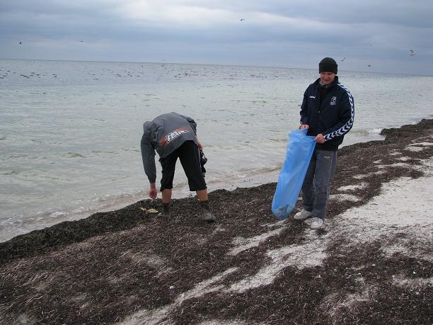 Побережье острова на Херсонщине усыпано мертвыми птицами, фото-2