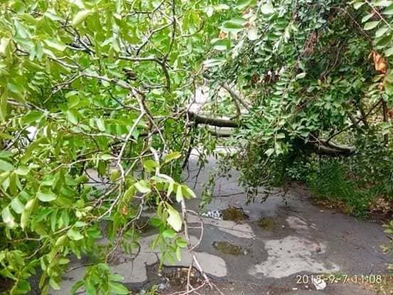 У Херсоні впало дерево, фото-1