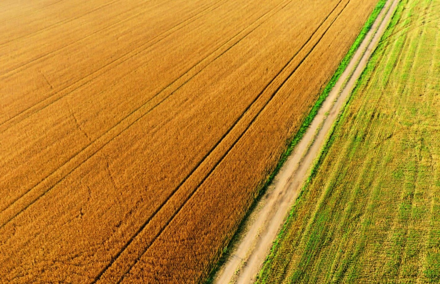 Мішки зерна замість грошей: чому мораторій на продаж землі буксує розвиток сіл Херсонщини, фото-1