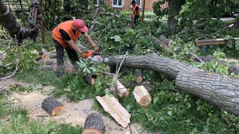 В Херсоне на детскую площадку рухнуло огромное аварийное дерево: местные жители в шоке
