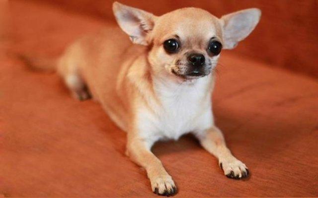 В Херсоне верный пес спас хозяина от смерти: шокированная жена вытащила самоубийцу из петли