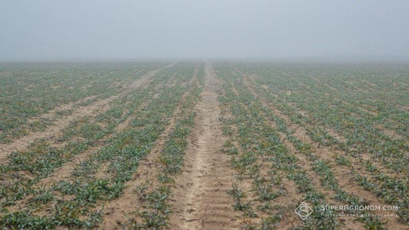 Теплая зима может оставить аграриев Херсонской области без половины урожая