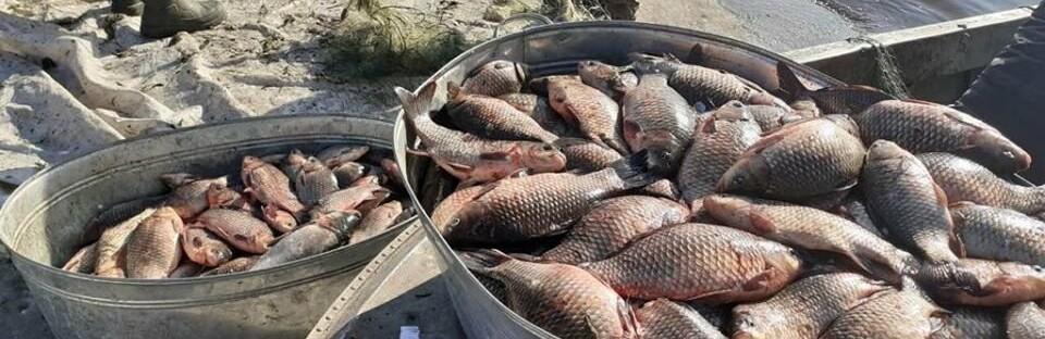 400 серебристых карасей, толстолобиков и щуку выбросили в Днепр полицейские